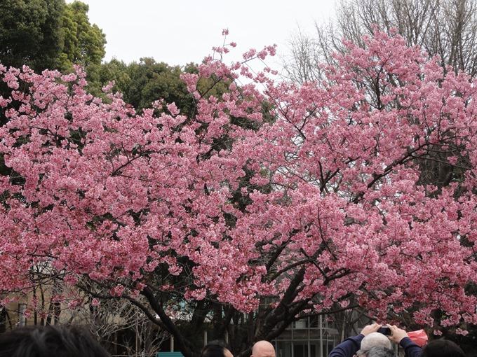 花見2016(上野恩賜公園)