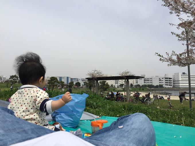 花見リベンジ2016(ふるさとの浜辺公園)